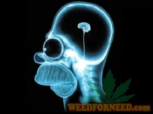 marijuana and brain