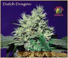 Dutch_Dragon