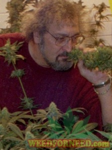 Jack Herer and his award winning cannabis strain