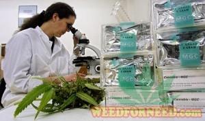 studies cannabis